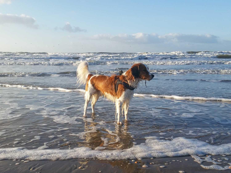 strand in Nederland hond altijd los lopen - Woef Welkom