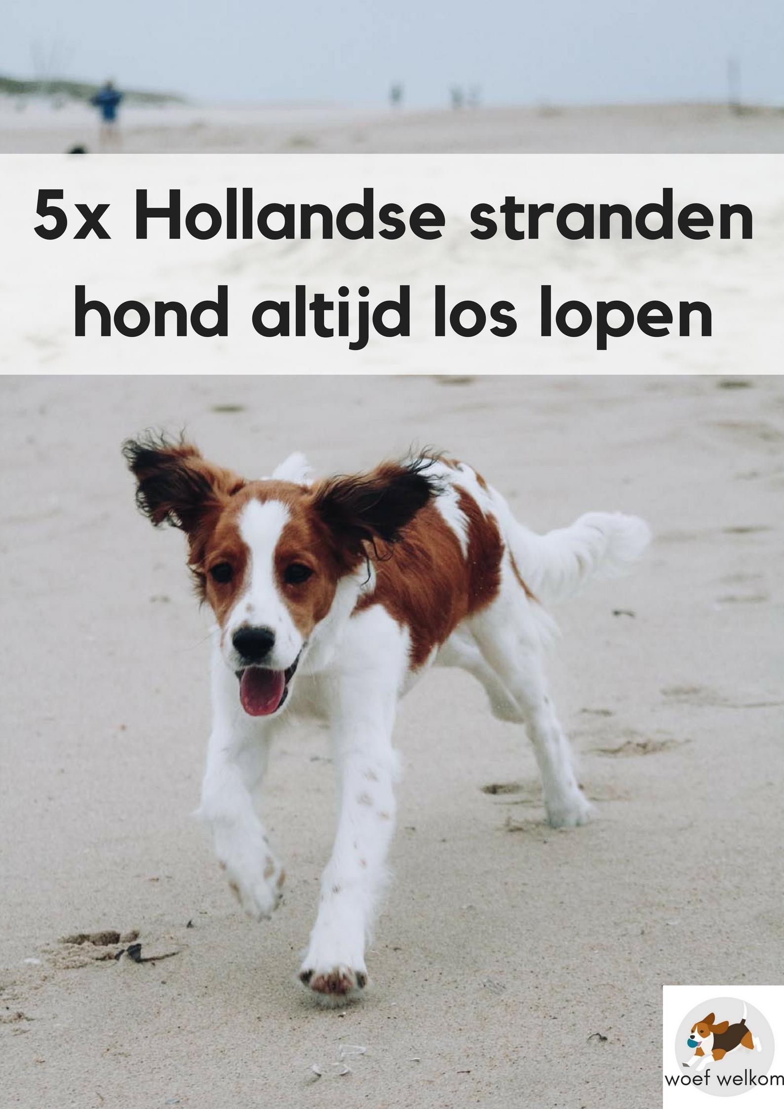 5 stranden in Nederland waar de hond altijd los mag lopen - Woef Welkom