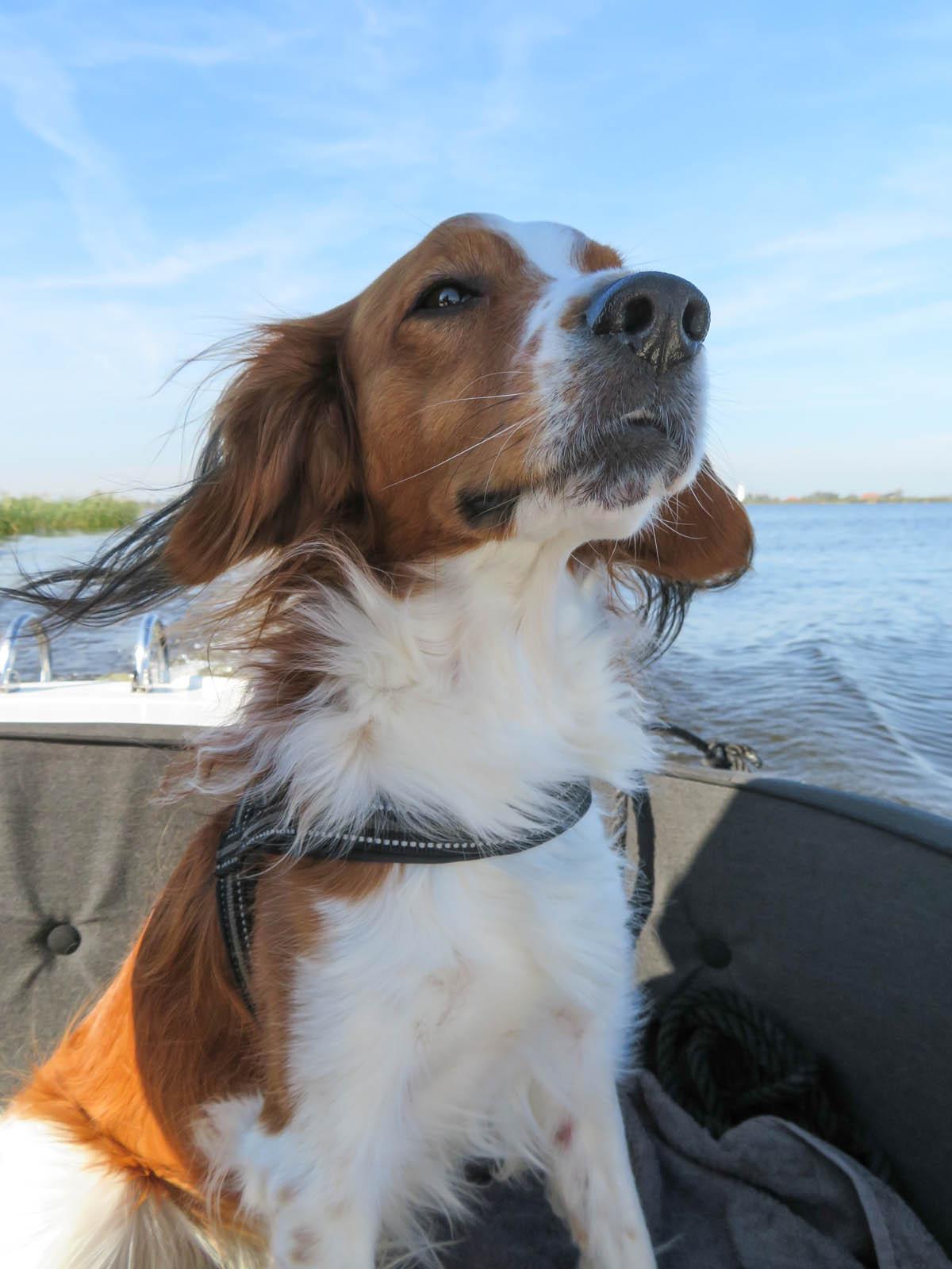 Met de hond in een bootje Nationaal Park De Alde Feanen, Friesland verkennen - Woef Welkom