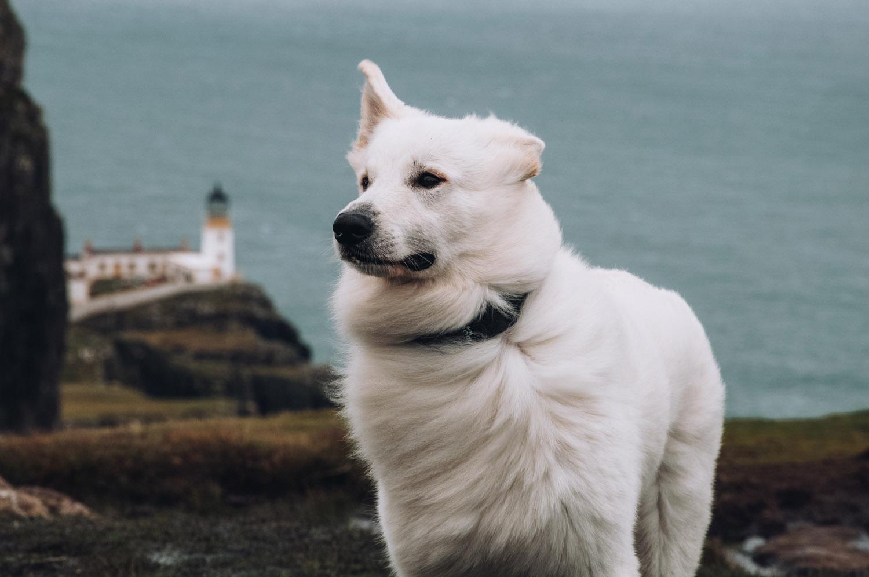 Reizen met een hond door Schotland - Woef Welkom