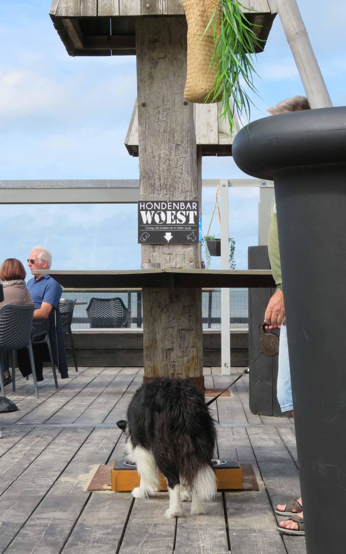 drinkwater bar voor honden bij strandtent Woest
