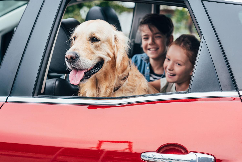 Hond mee op vakantie in de auto - Woef Welkom