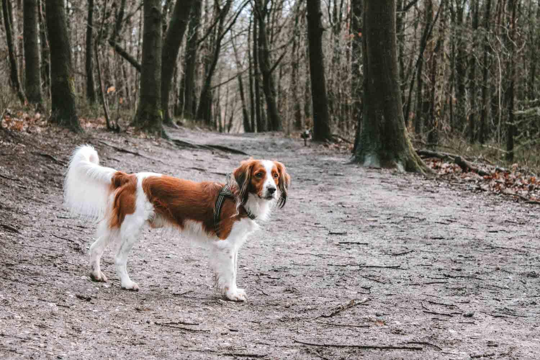 Weekendje weg met hond naar de Veluwe - Woef Welkom