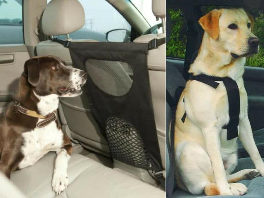 Hond mee in de auto op vakantie: handige producten en tips - Woef Welkom