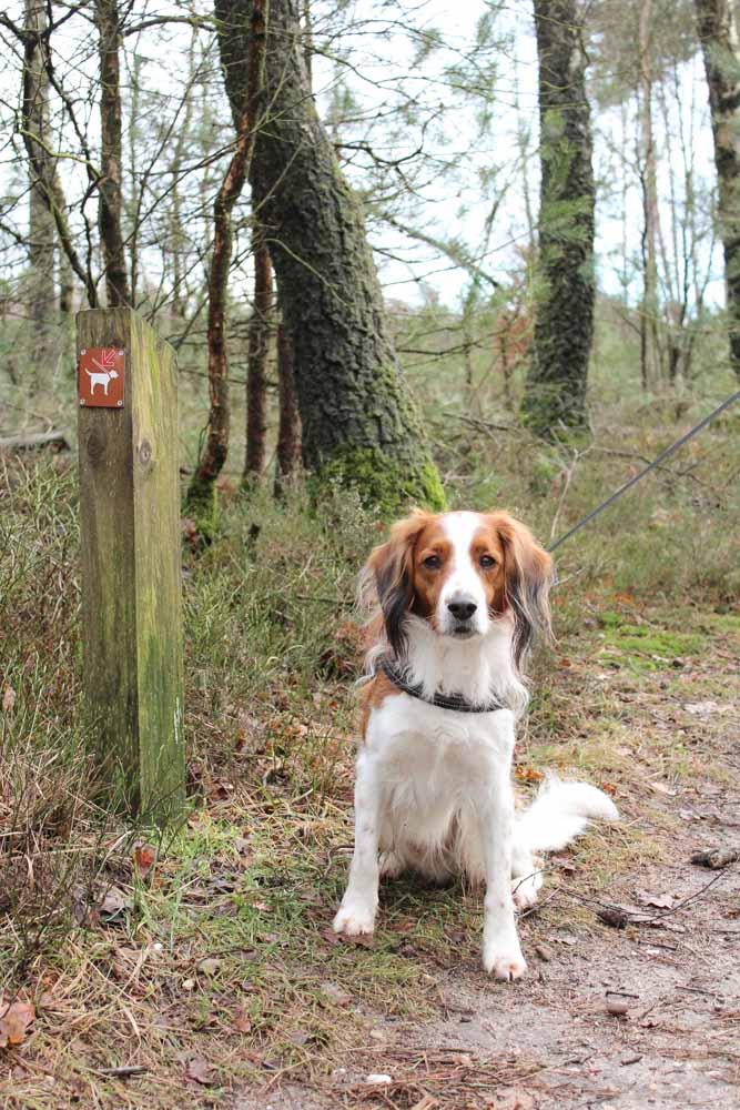 Het Leesten, hondenbos - Woef Welkom