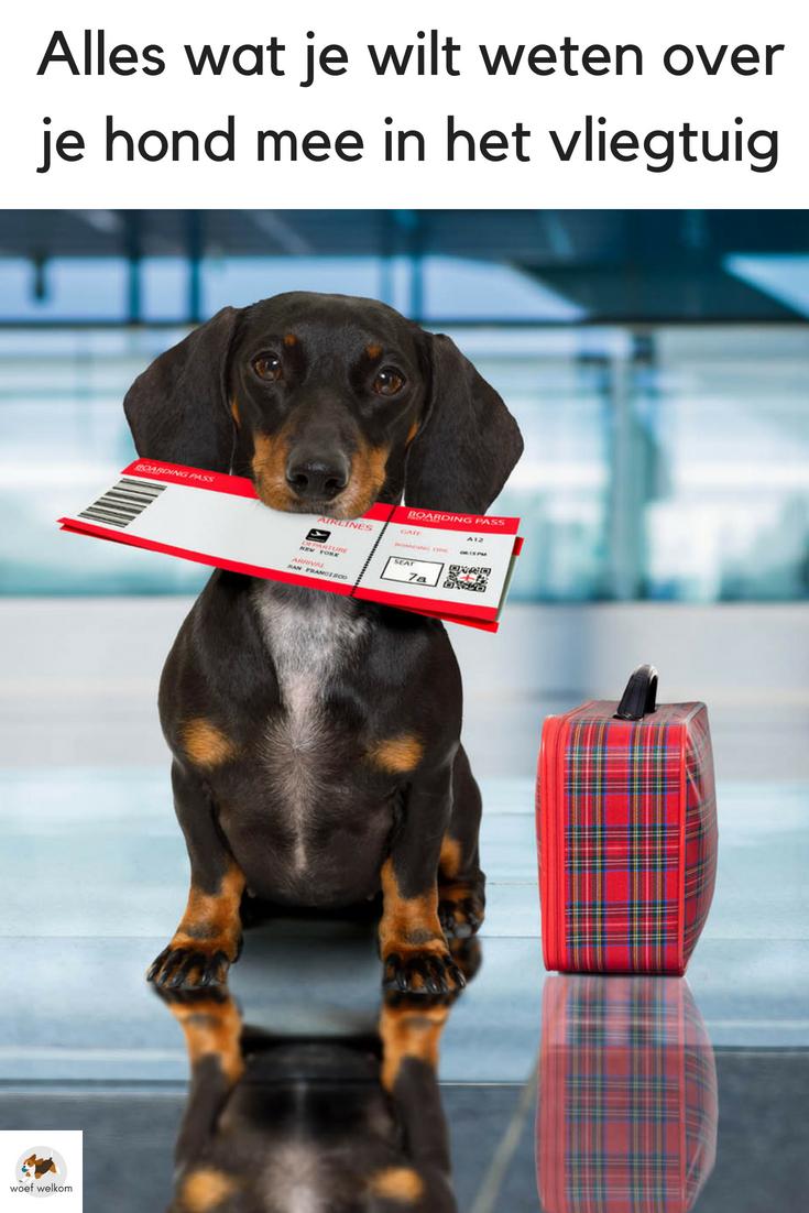 Alles wat je wilt weten over je hond mee in het vliegtuig - Woef Welkom