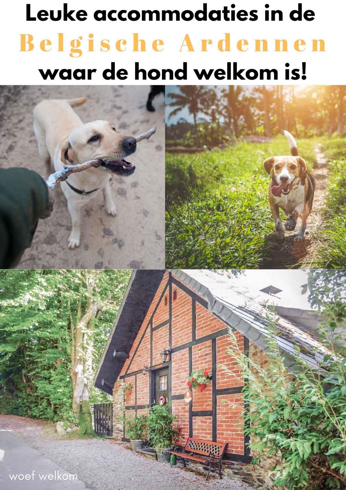 leuke accommodaties in de Belgische Ardennen waar de hond welkom is