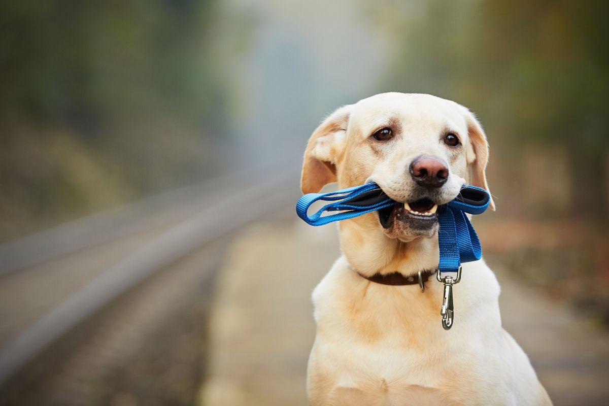 Alles wat je wilt weten over je hond meenemen in de trein