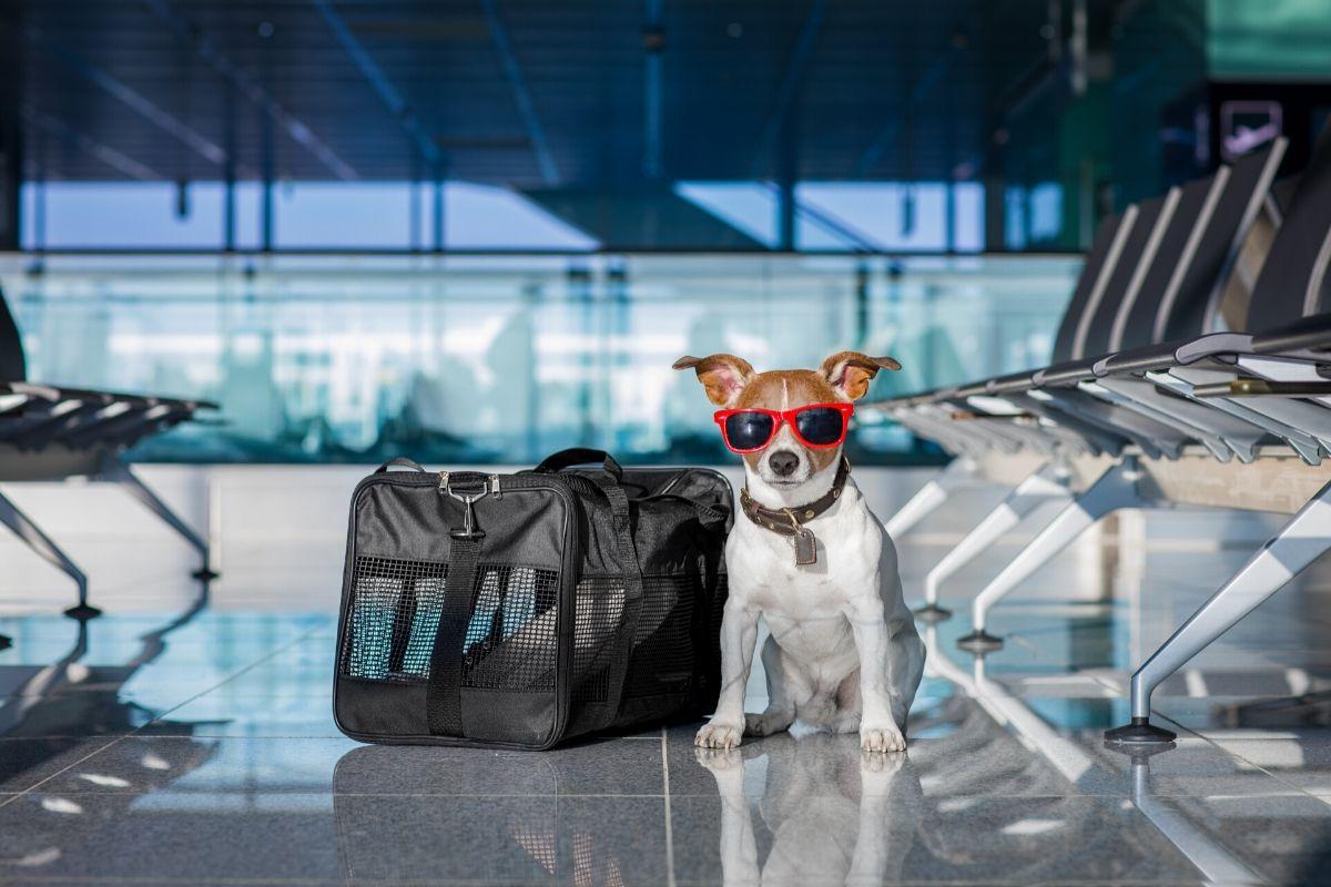 Vliegen met je hond? Lees hier alles wat je wilt weten.