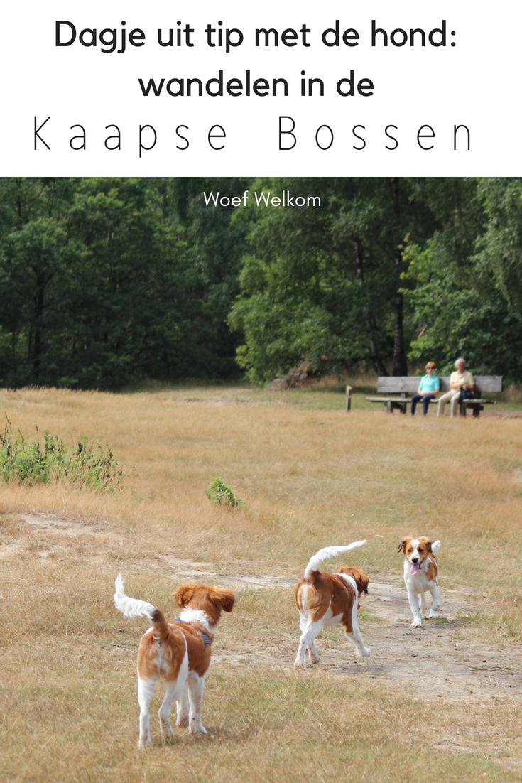 Met de hond wandelen in de Kaapse Bossen in Doorn - Woef Welkom