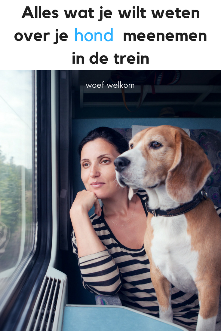 Alles wat je wilt weten over je hond meenemen in de trein - Woef Welkom