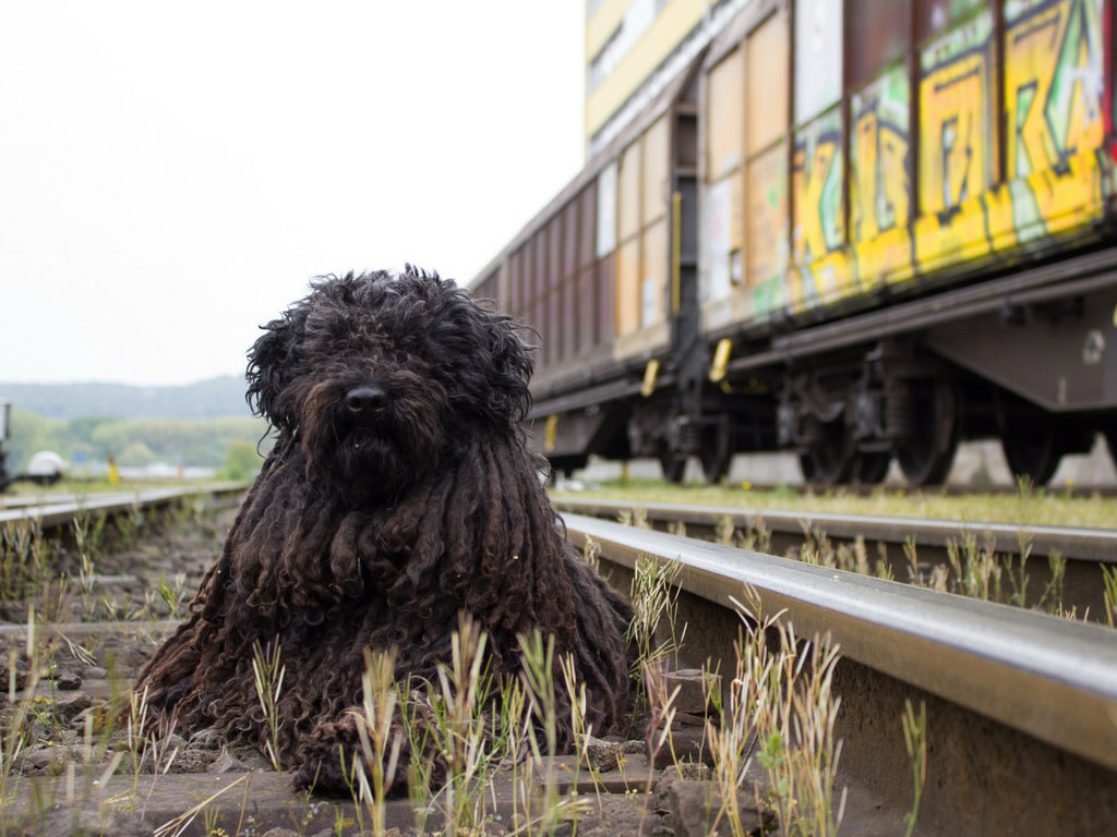 Met de hond reizen met de trein - Woef Welkom