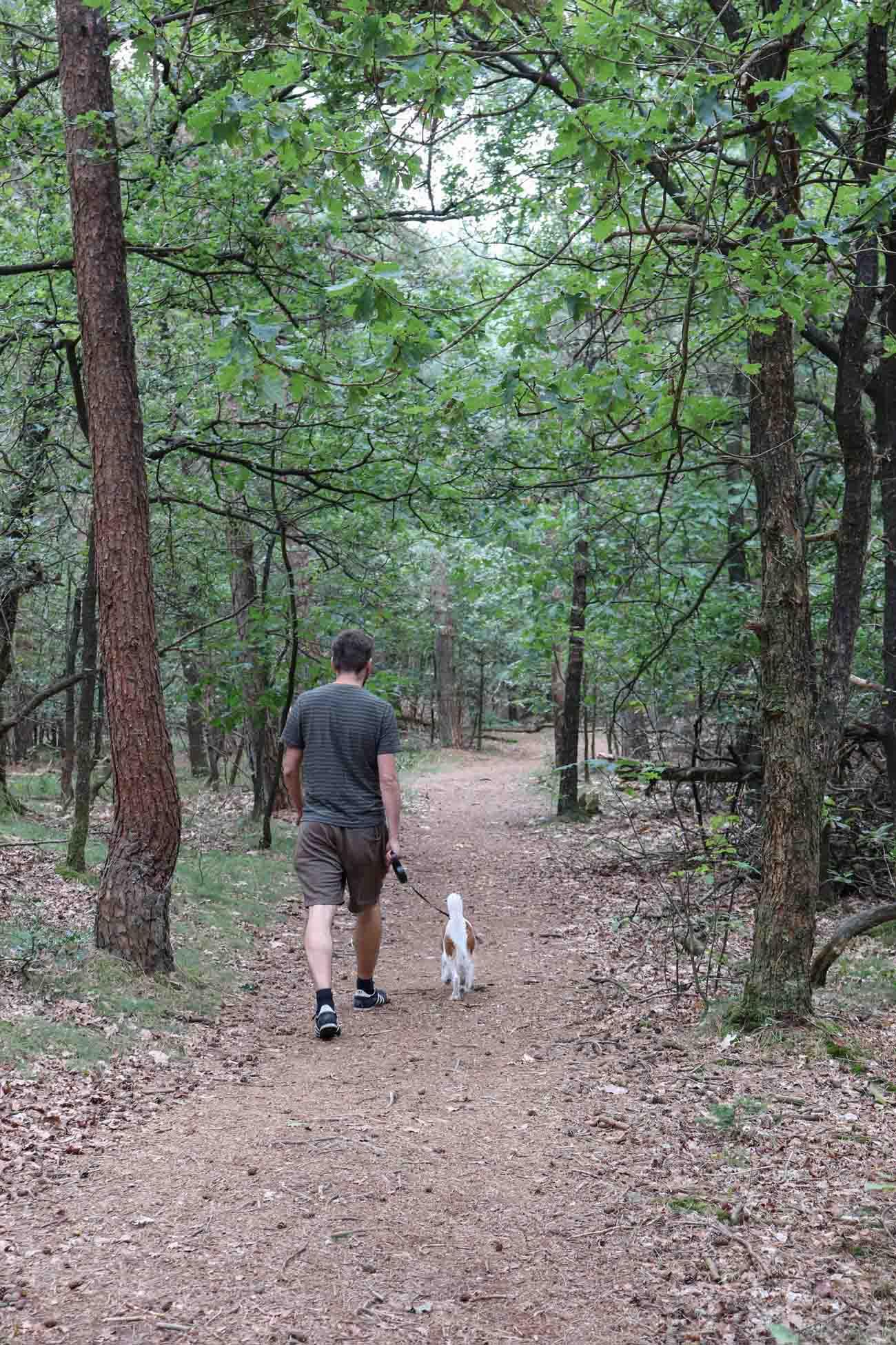 Met de hond naar het leukste losloopgebied in het Dwingelderveld - Woef Welkom