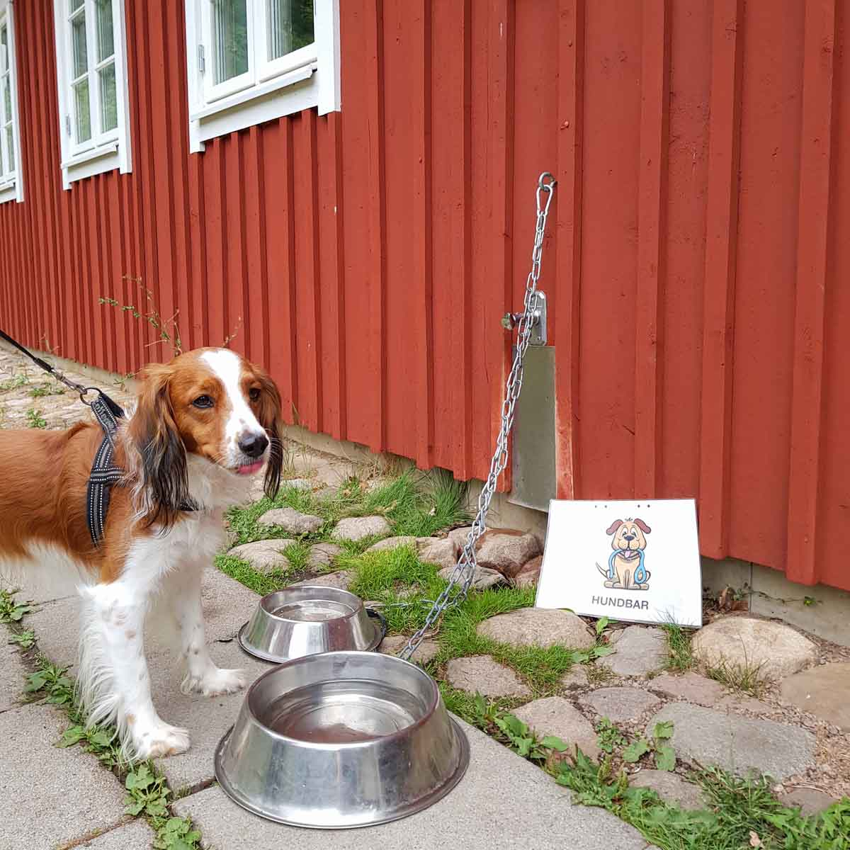 Hond mee naar Nationaal Park Söderåsen