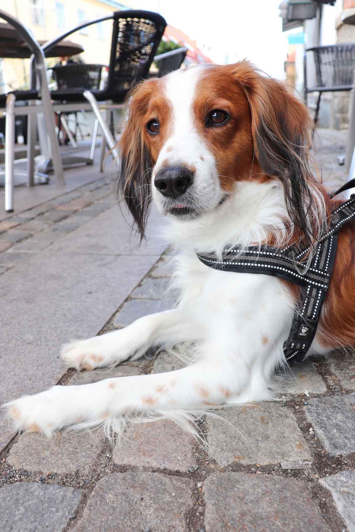 Met de hond op vakantie naar Skåne in Zweden: onze ervaringen en tips