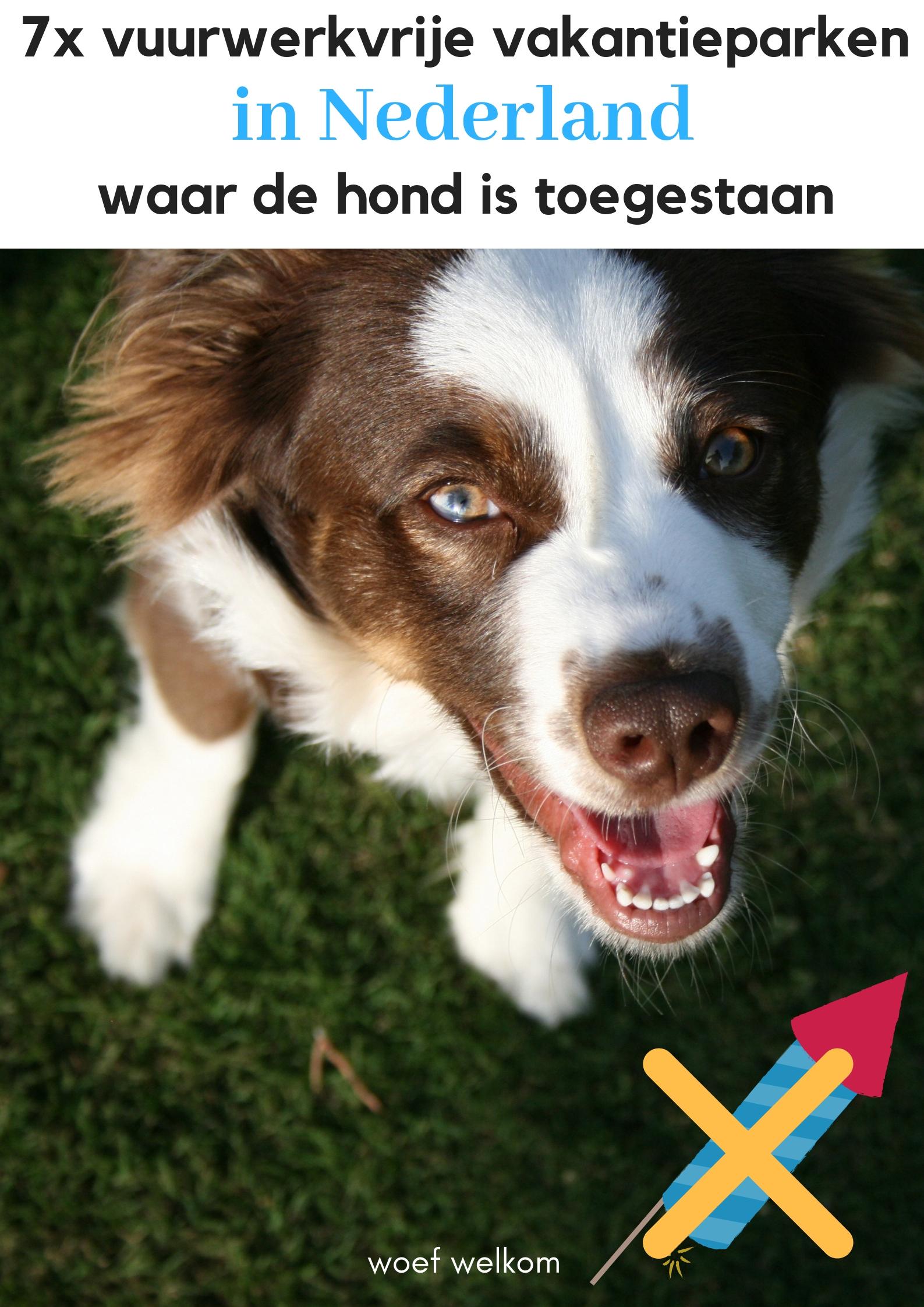 7x vuurwerkvrije vakantieparken in Nederland waar de hond is toegestaan - Woef Welkom