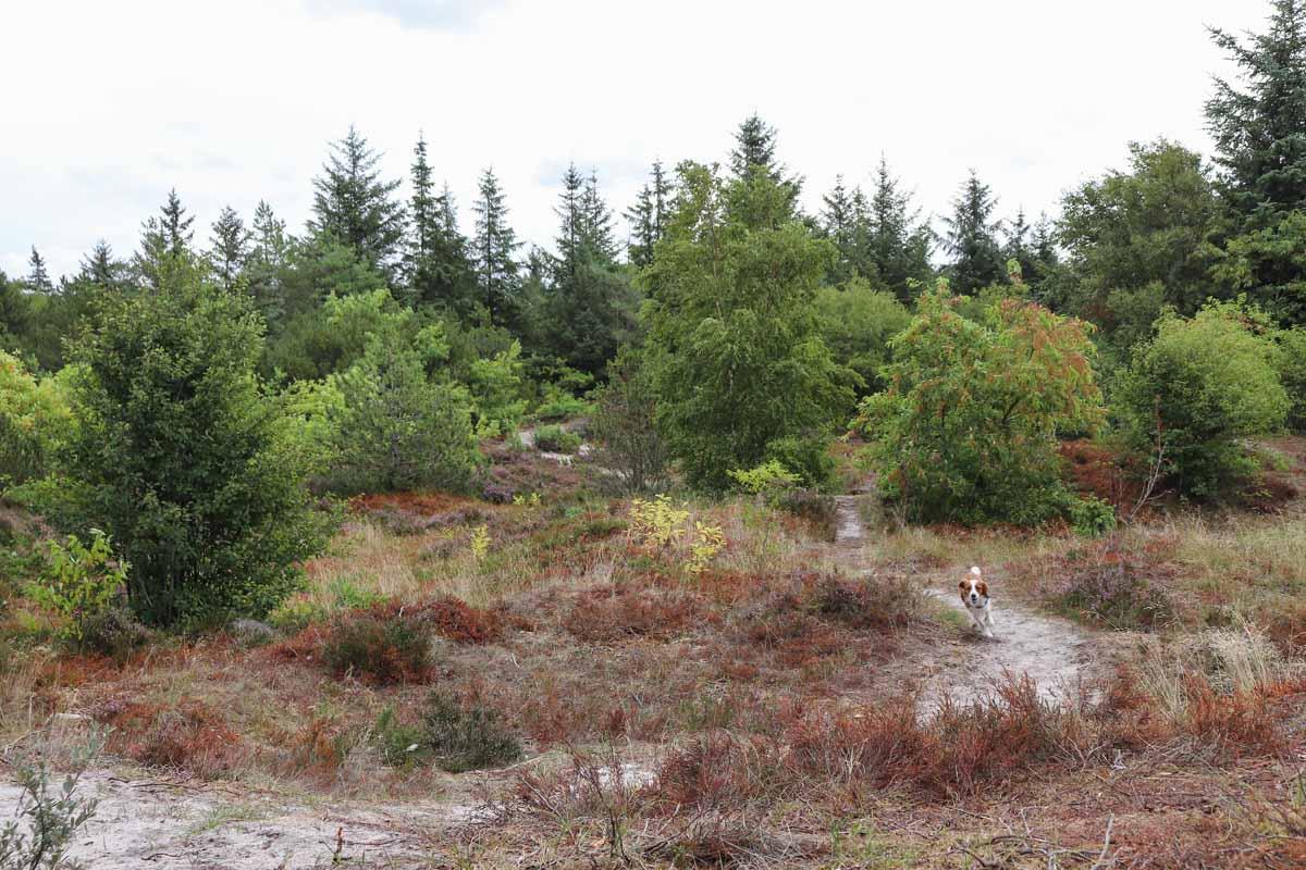Hondenbos bij Hvide Sande, Denemarken - Woef Welkom