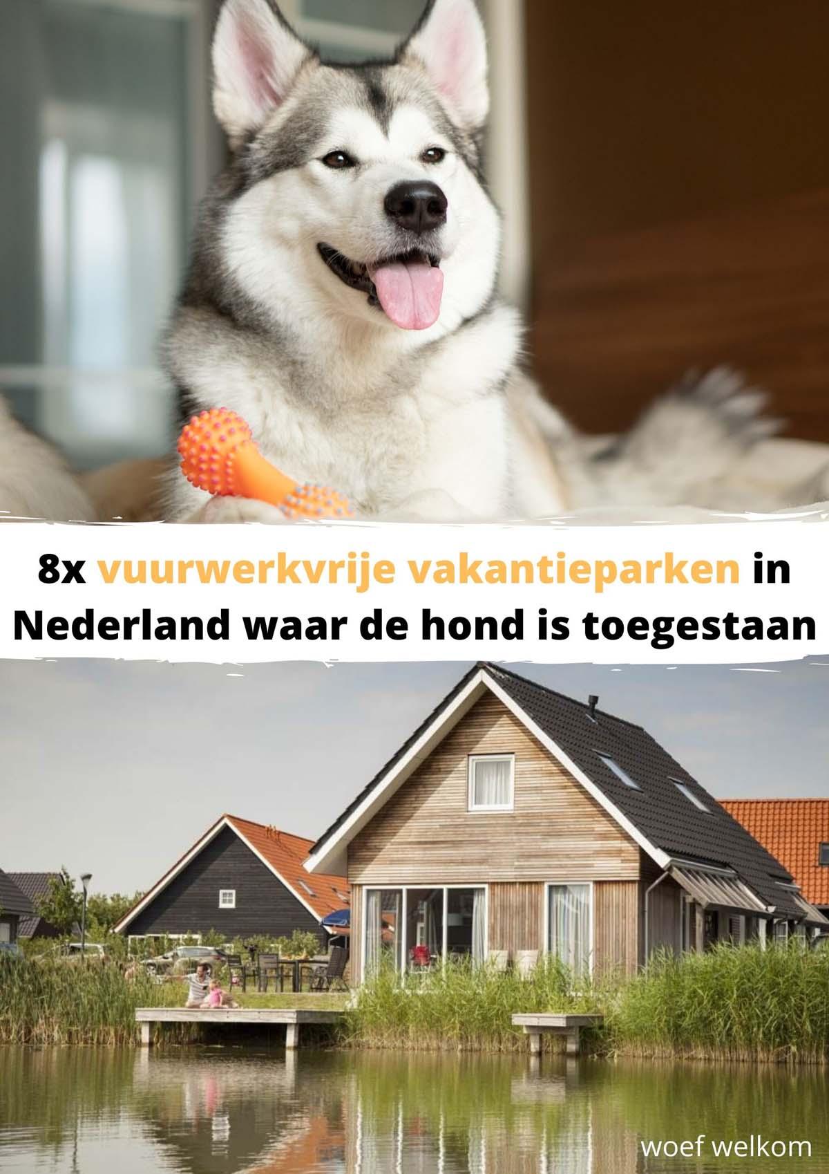 8x vuurwerkvrije vakantieparken in Nederland waar de hond is toegestaan