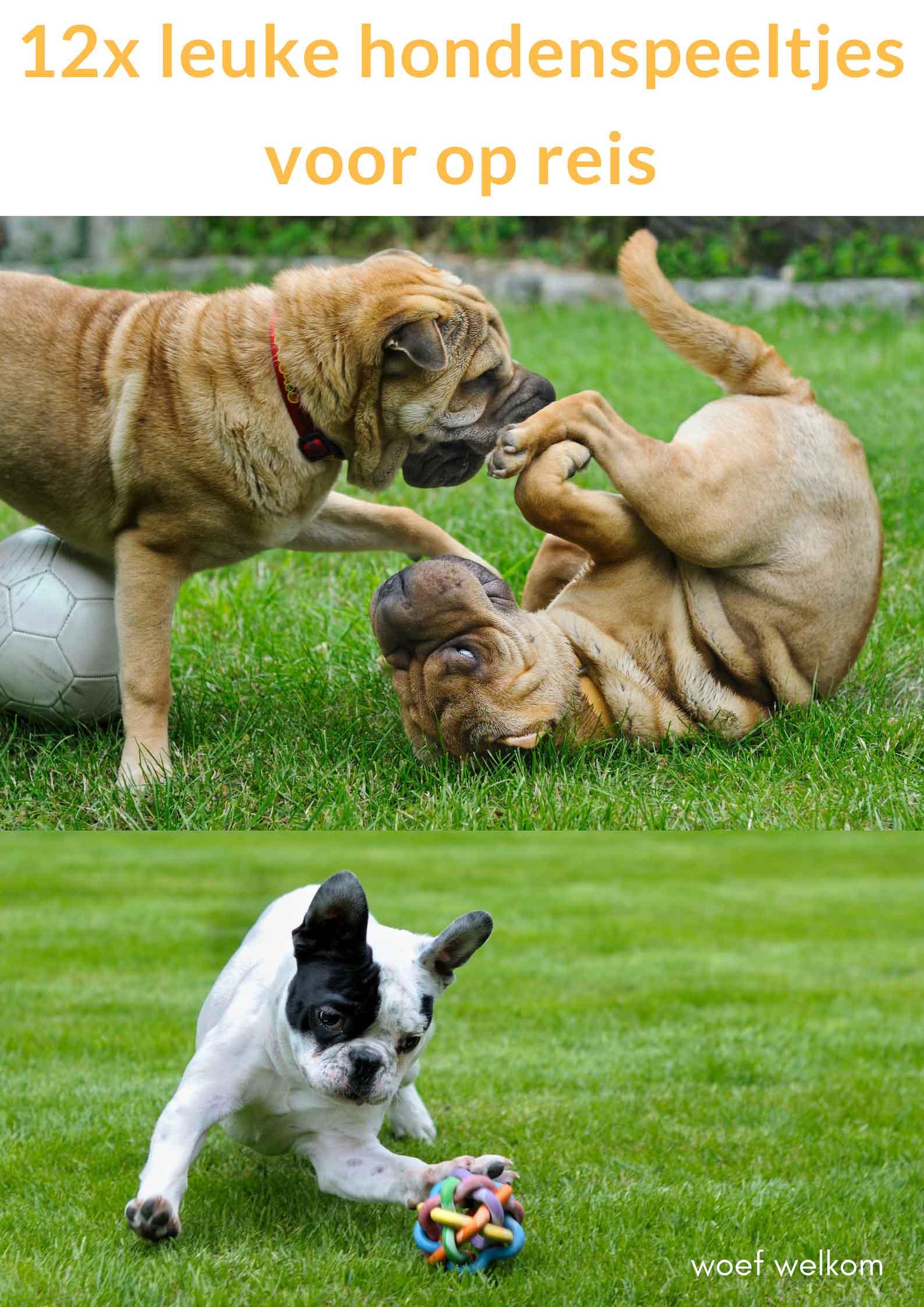 12x leuke hondenspeeltjes voor op reis - Woef Welkom