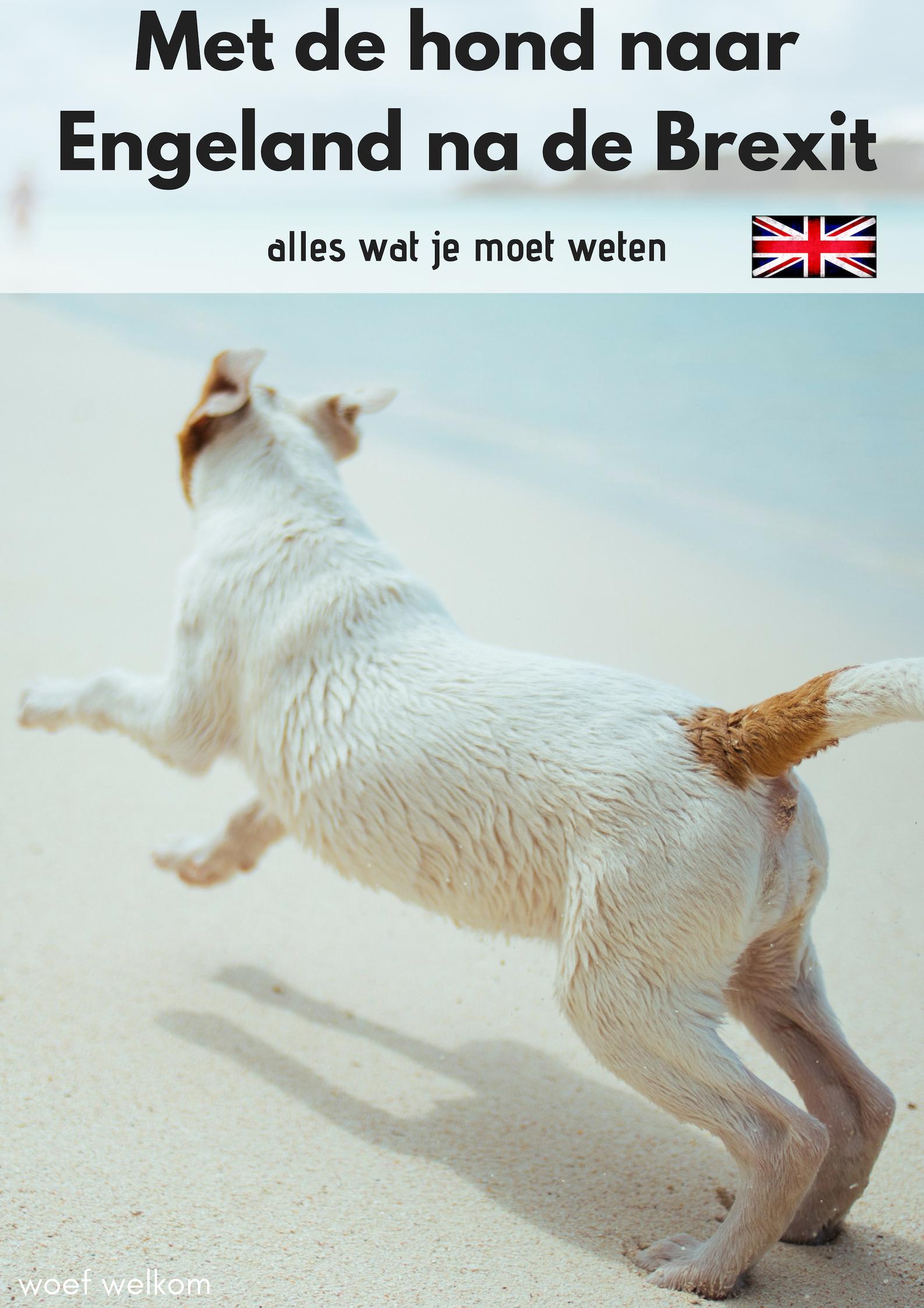 Met de hond naar Engeland na de Brexit - Woef Welkom