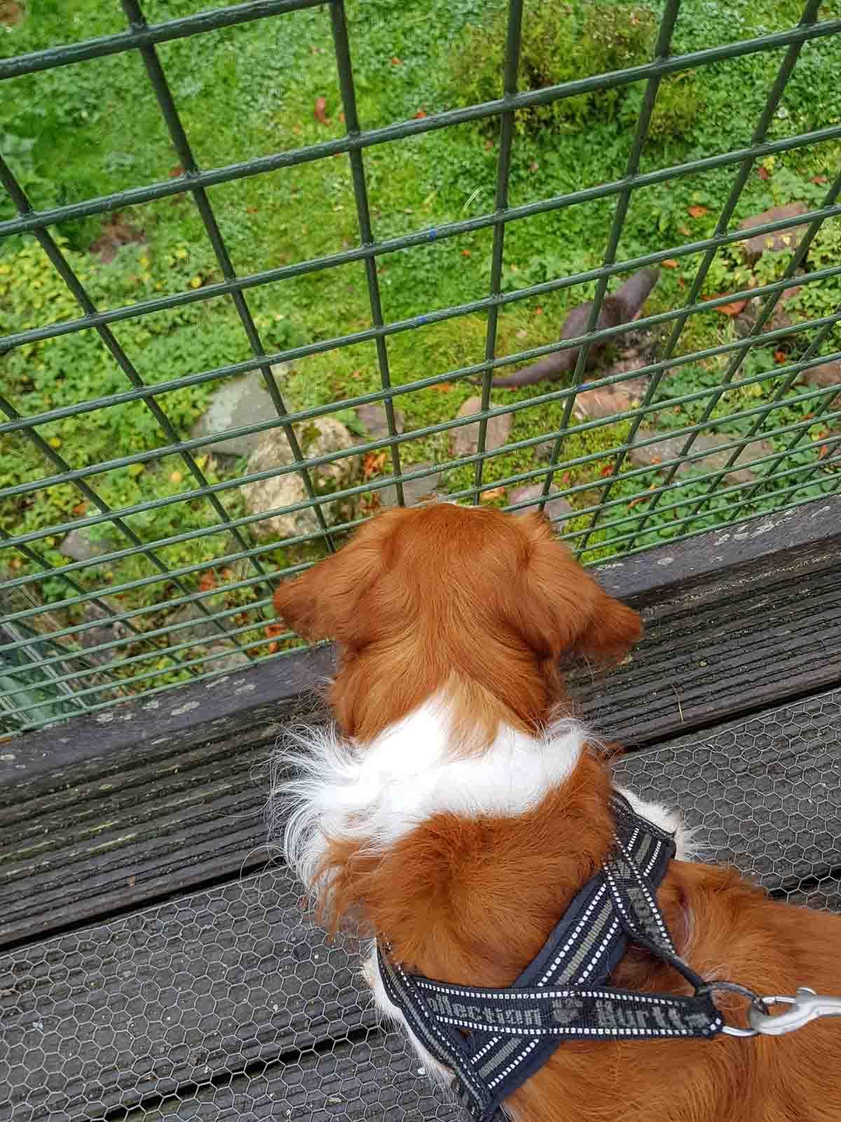Met de hond naar Natuurpark Lelystad - Woef Welkom