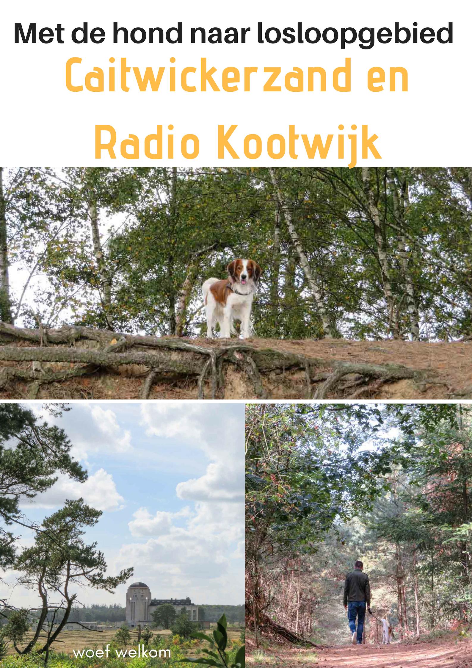 Met de hond naar losloopgebied Caitwickerzand en Radio Kootwijk - Woef Welkom