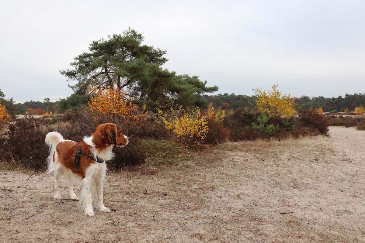 Met de hond naar de Soester Duinen - Woef Welkom