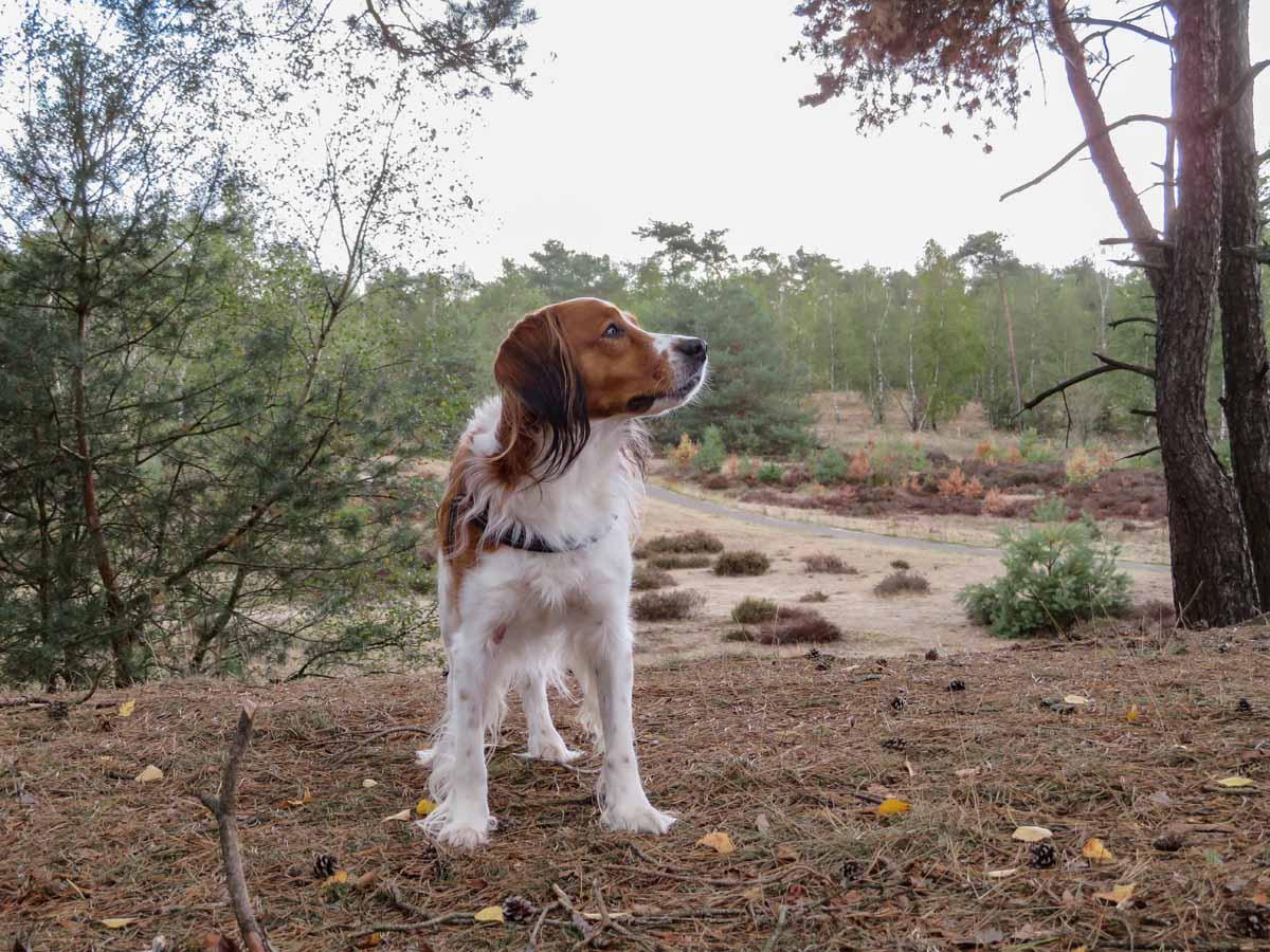Met de hond naar losloopgebied Caitwickerzand - Woef Welkom