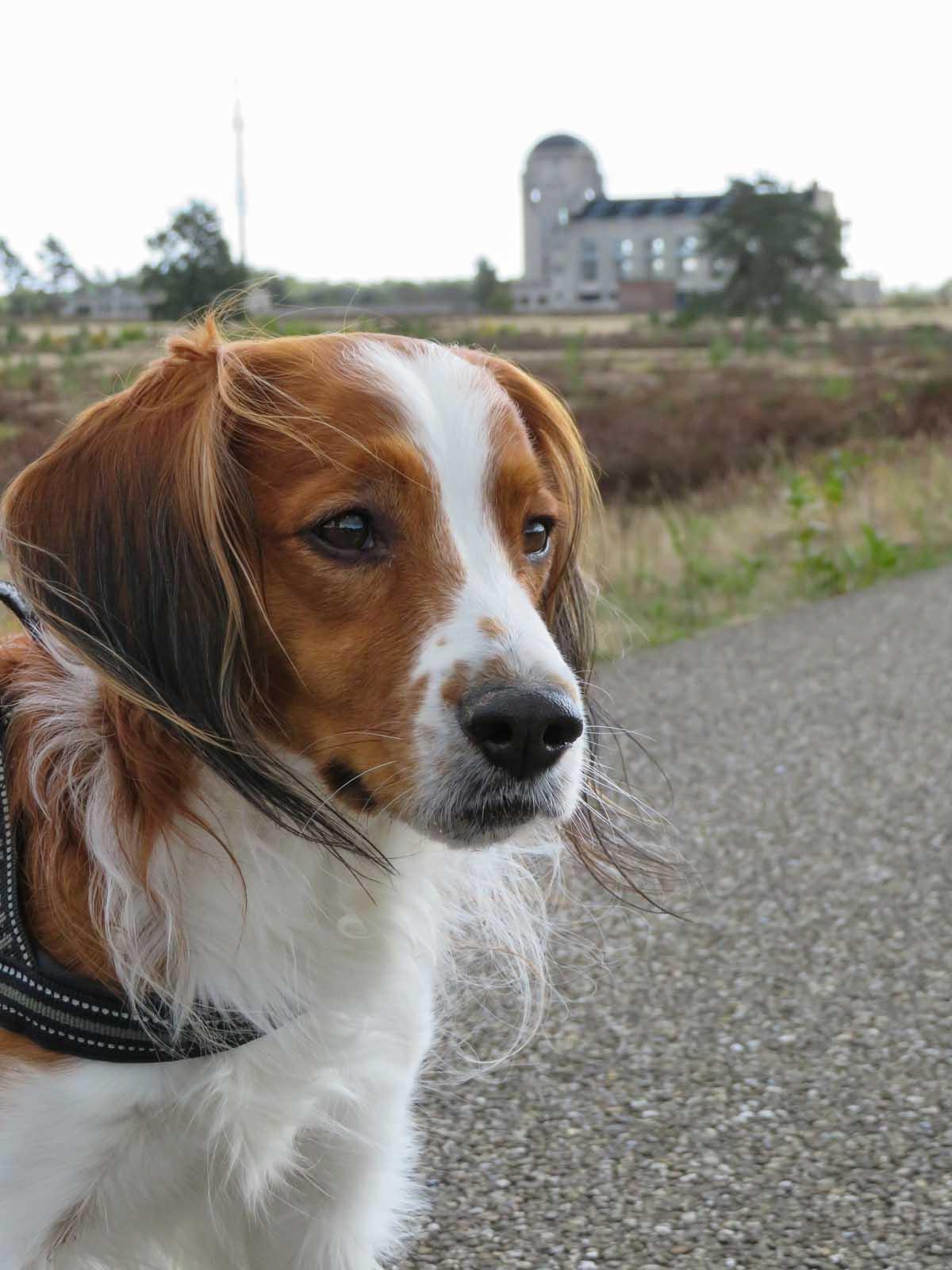 Met de hond naar Radio Kootwijk - Woef Welkom