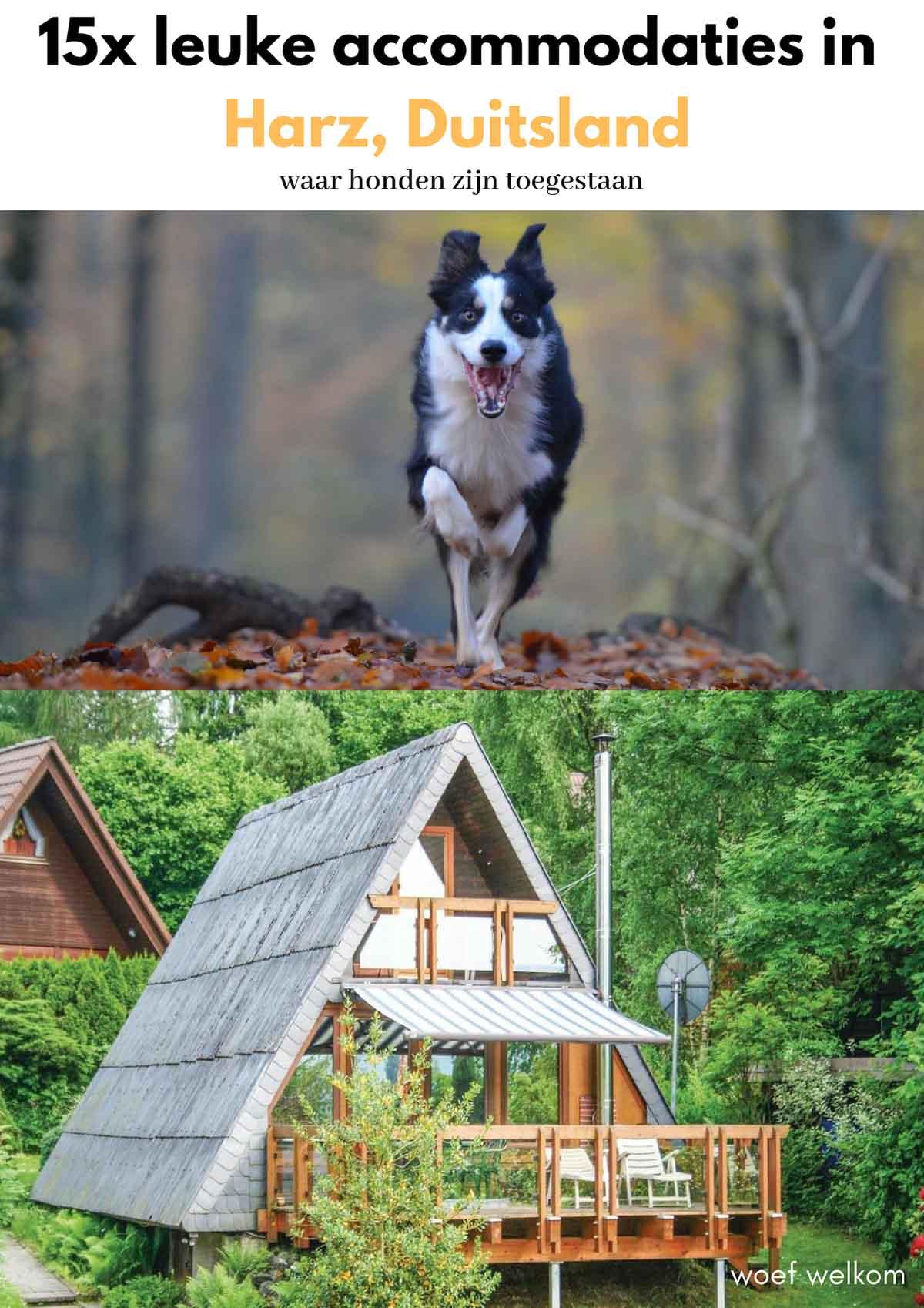 15x leuke accommodaties in Harz met je hond - Woef Welkom