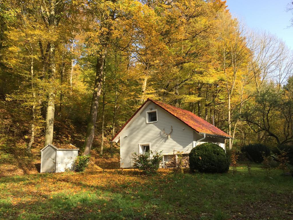 15x leuke accommodaties in Harz met je hond