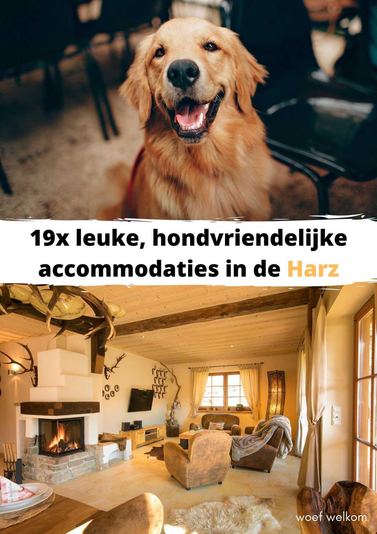 19x leuke, hondvriendelijke accommodaties in de Harz