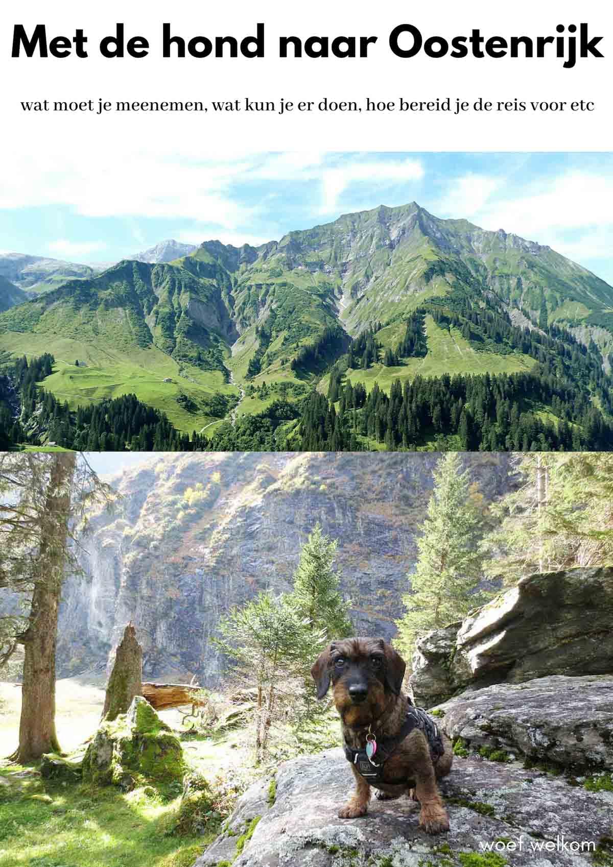 Met de hond naar Oostenrijk
