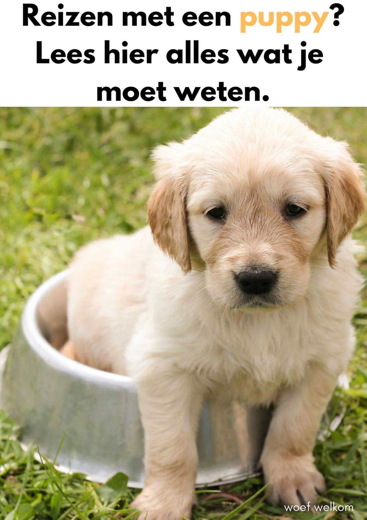 Reizen met een puppy [handige tips]