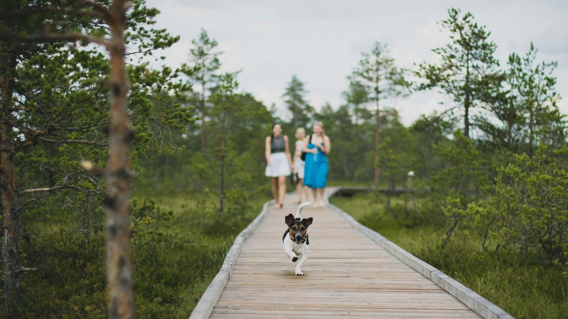 Inpaklijst voor je hond mee op reis [gratis download!] - Woef Welkom