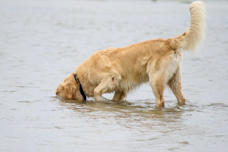 Weekendje weg met de hond naar Zeeland