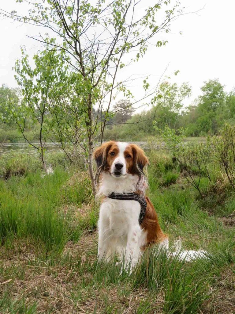 Met de hond naar het Drents-Friese Wold [natte neuzenroute] - Woef Welkom