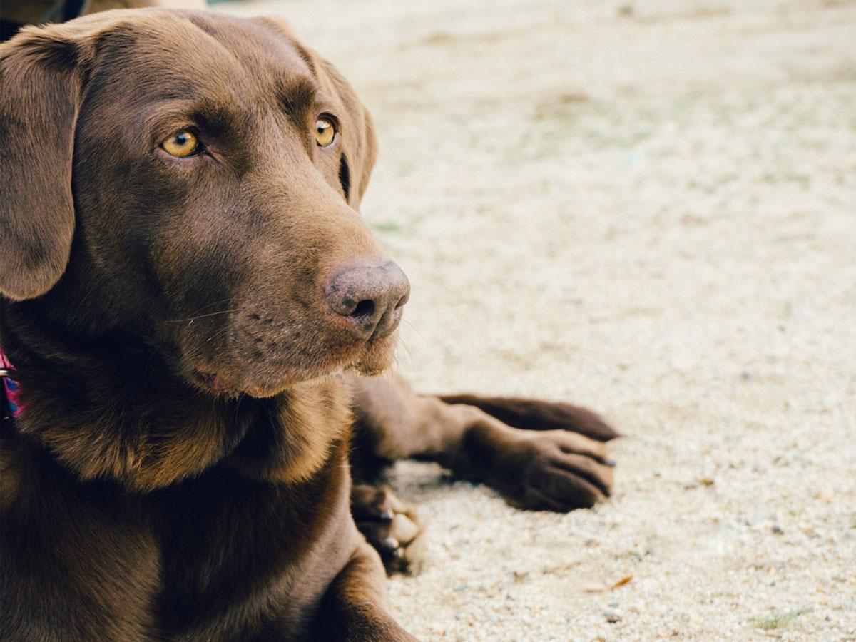 Vakantiepark texel met hond - Woef Welkom