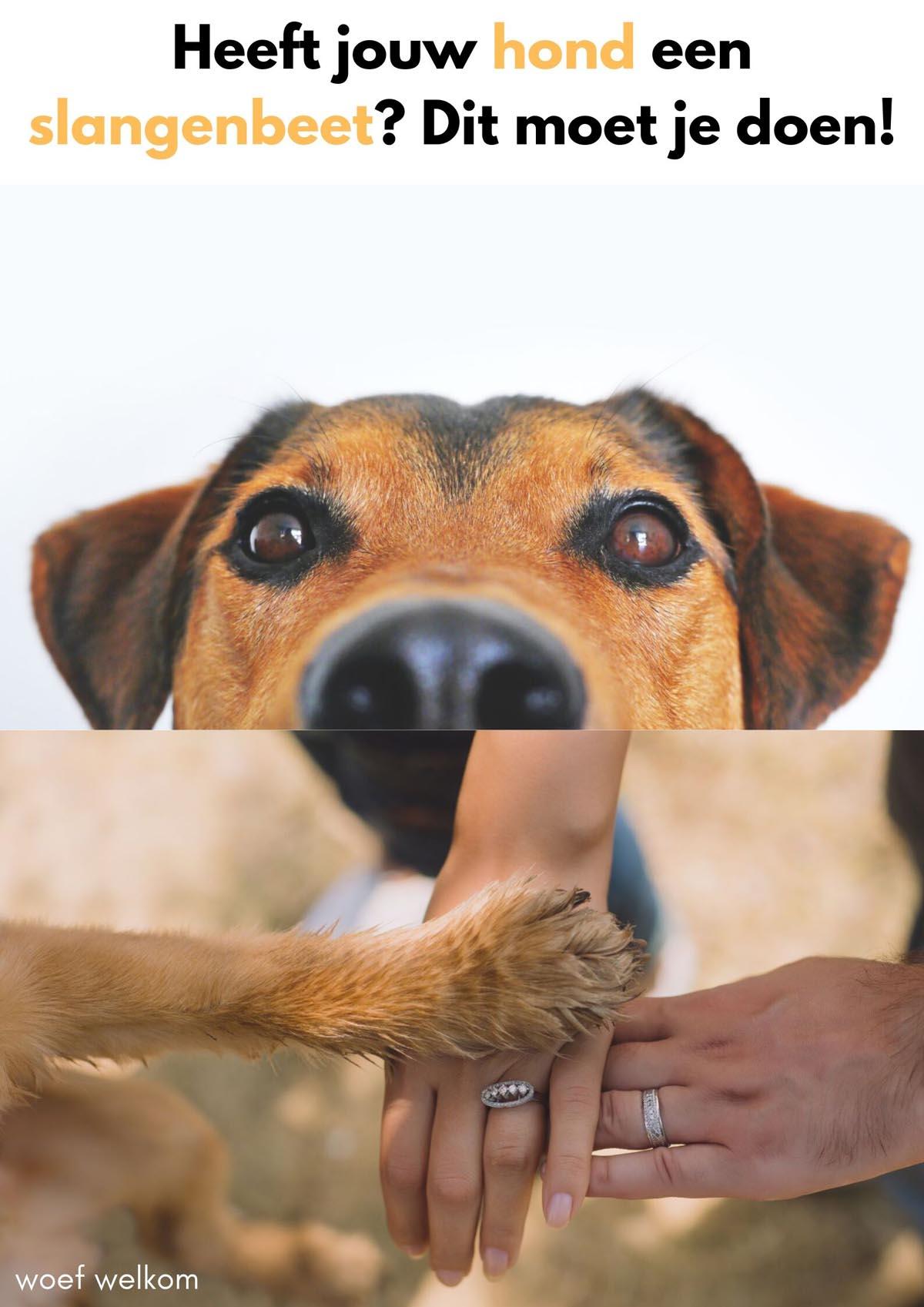 Heeft jouw hond een slangenbeet? Dit moet je doen!