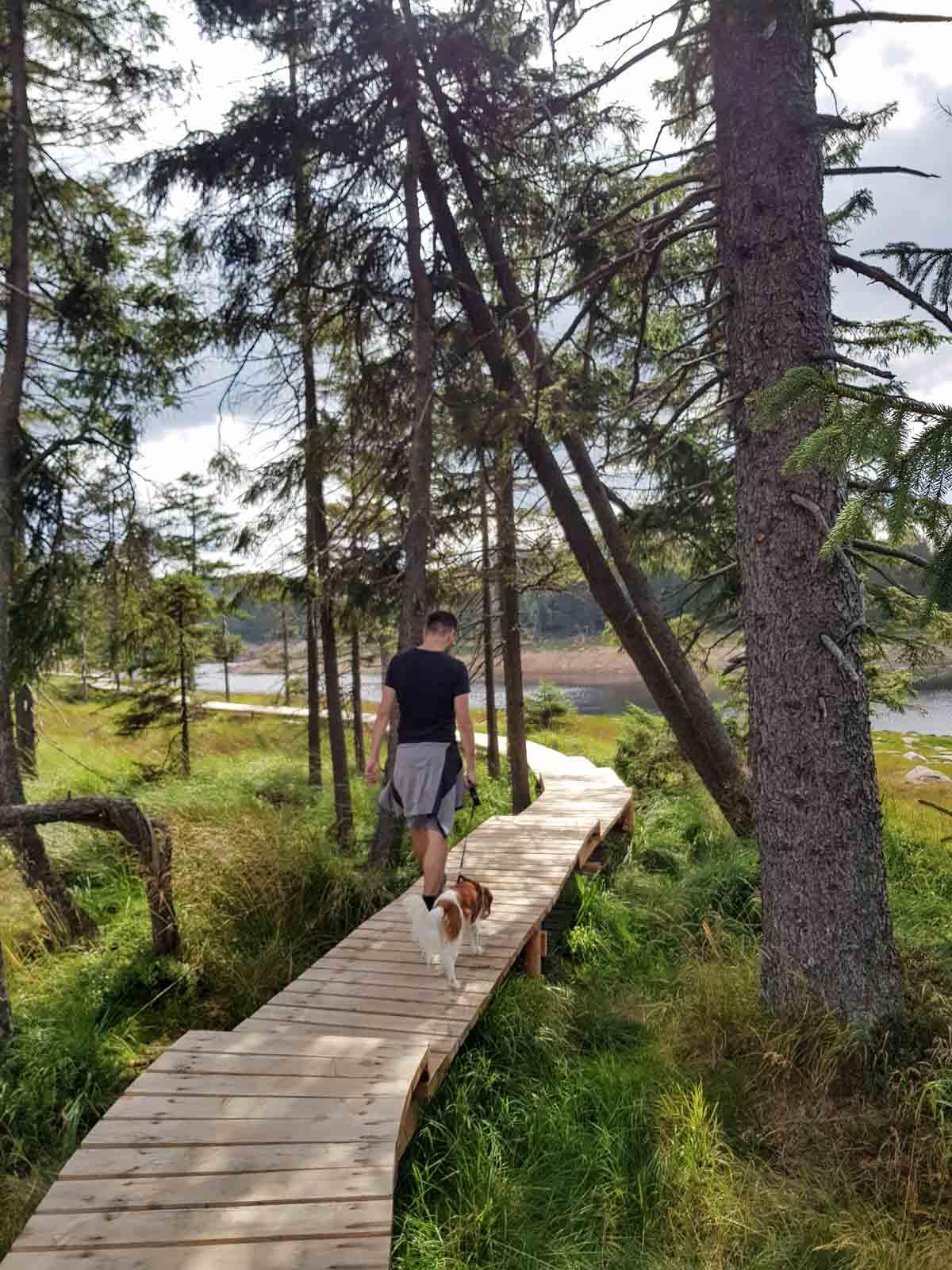Met de hond wandelen in de Harz bij Oderteich