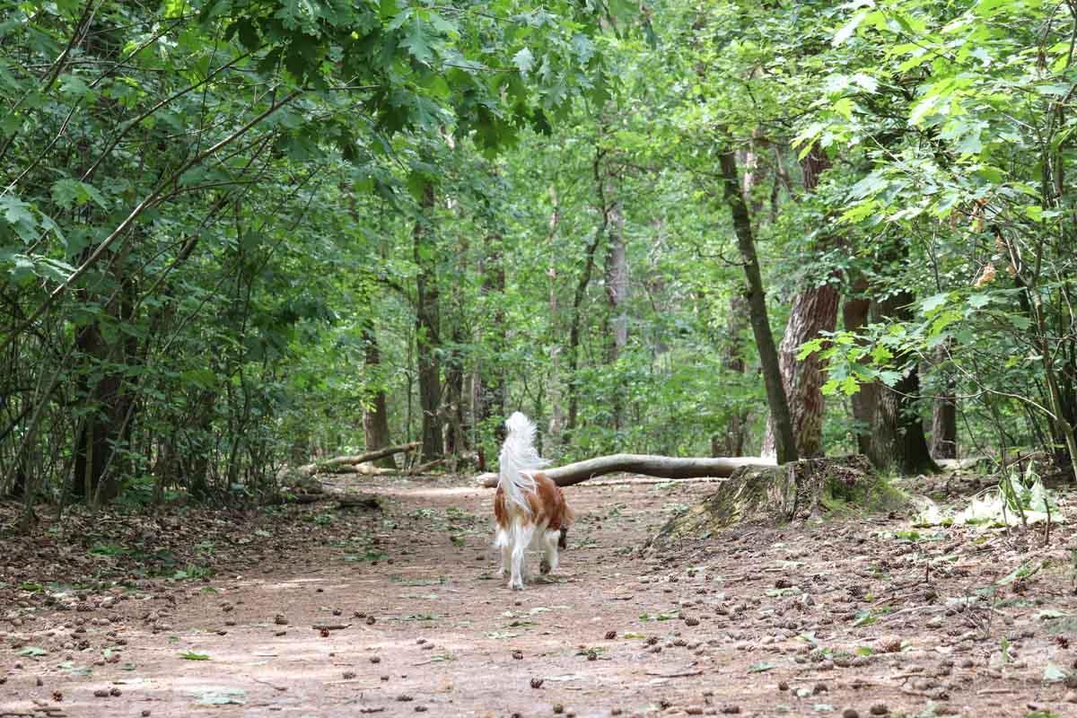 Met de hond naar de Loonse en Drunense Duinen