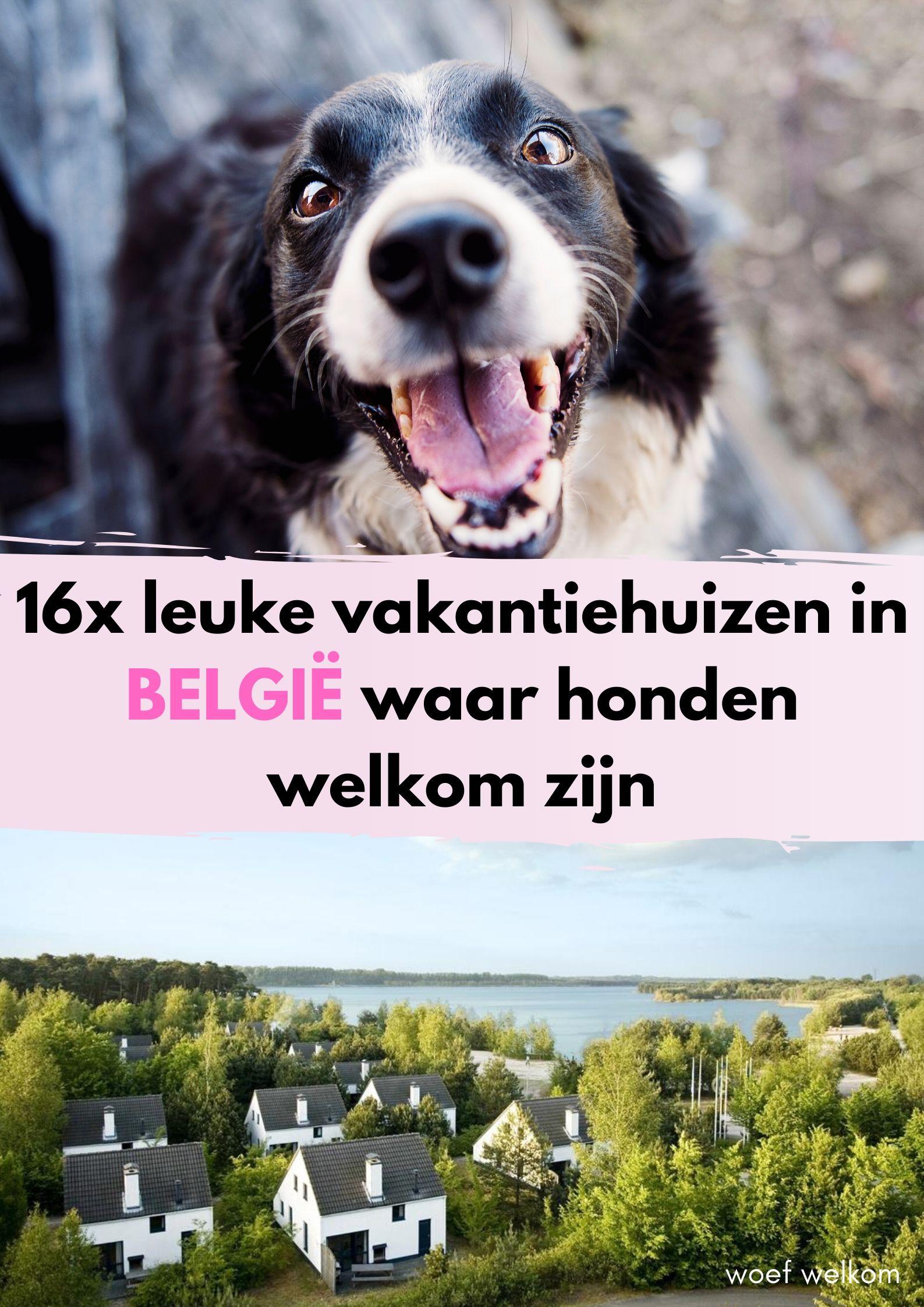 16x de leukste vakantieparken in België met hond