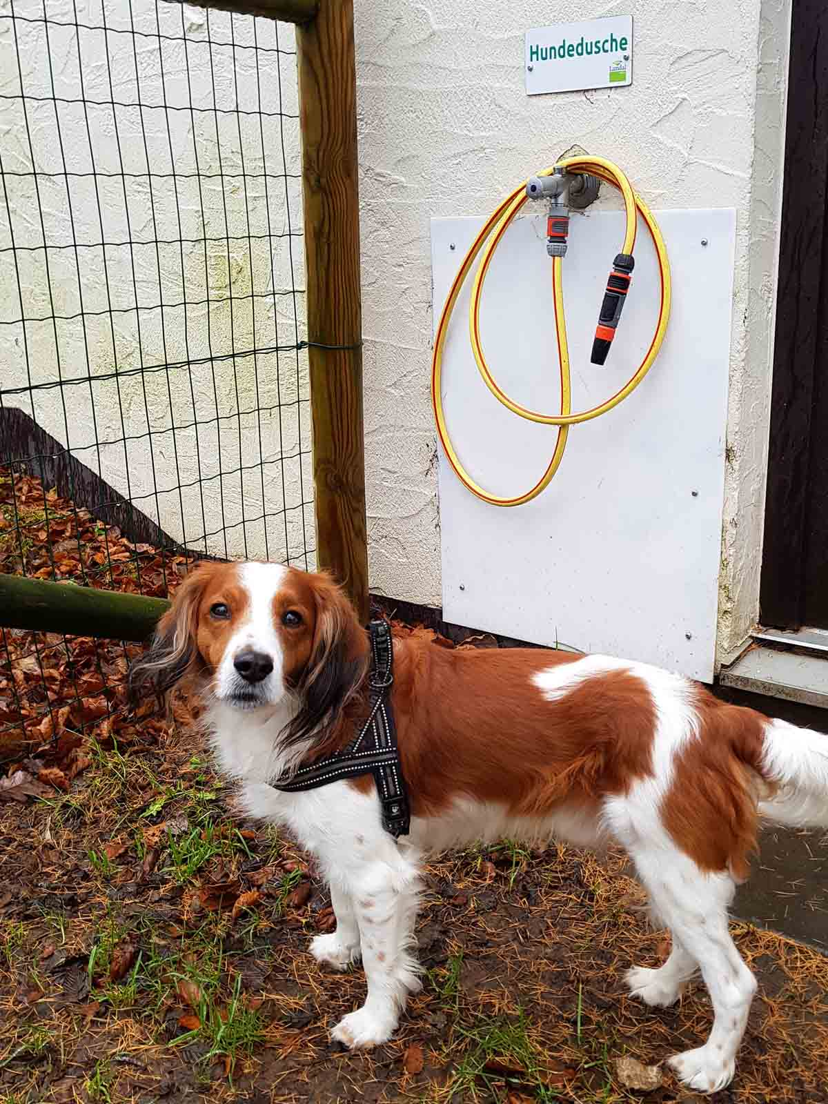 Met de hond naar Landal Wirfttal [onze ervaring]
