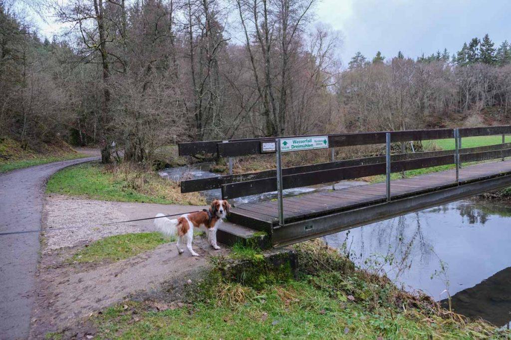 Met de hond wandelen in de Eifel bij de Dreimühlen waterval