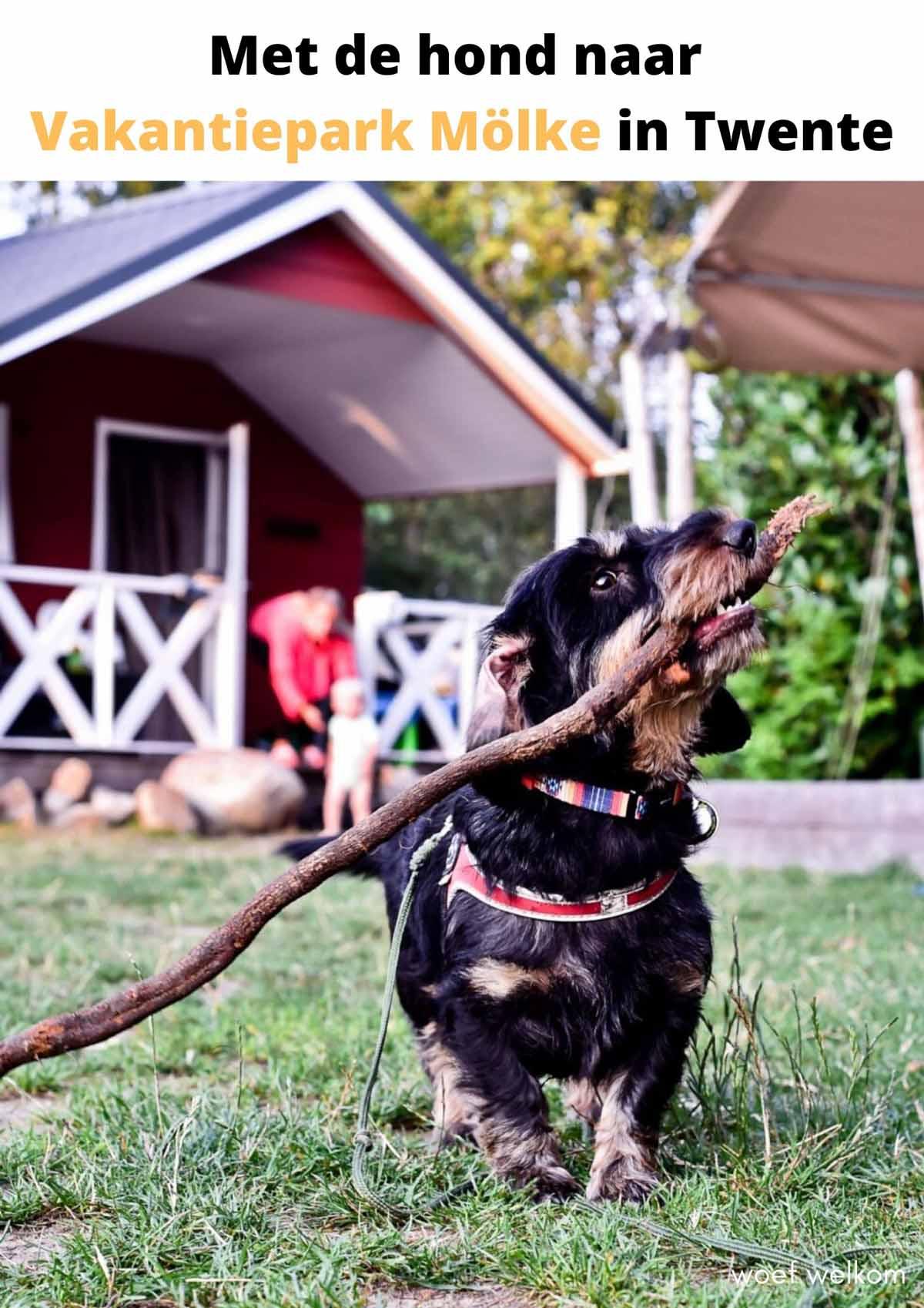 Met de hond naar Vakantiepark Mölke