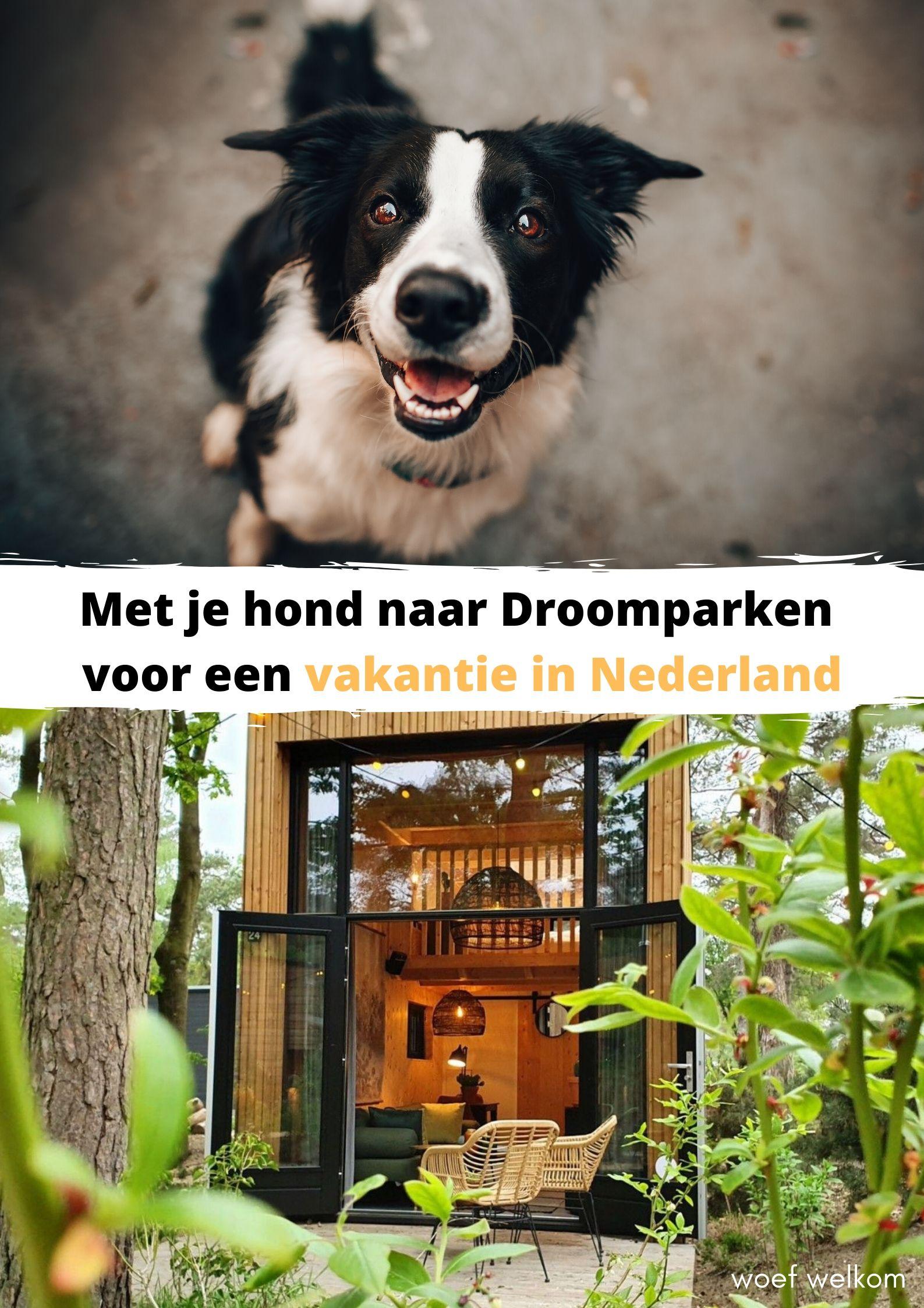 Met je hond naar Droomparken voor een vakantie in Nederland