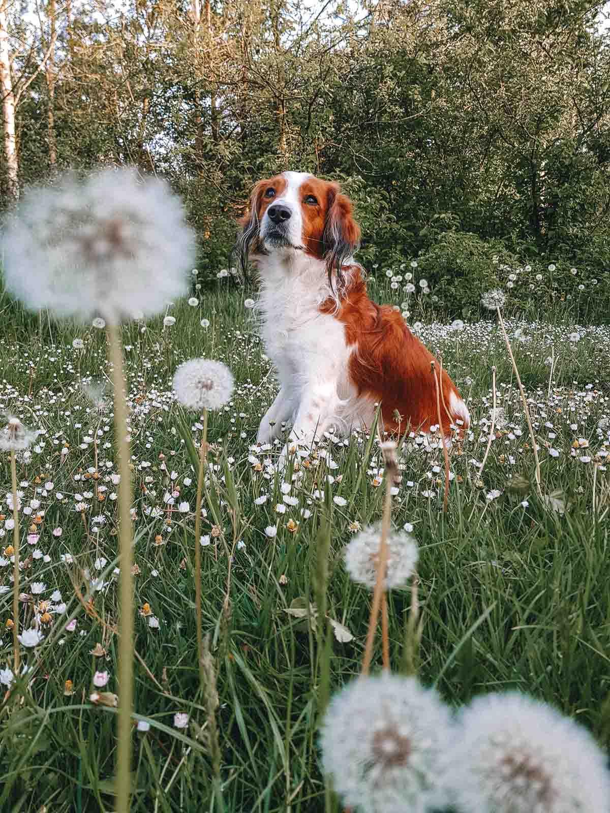Met de hond naar Landal Twenhaarsveld [onze ervaring]