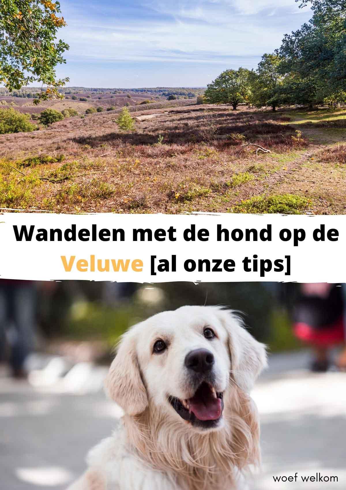 Met de hond naar Landal Miggelenberg [onze ervaring]