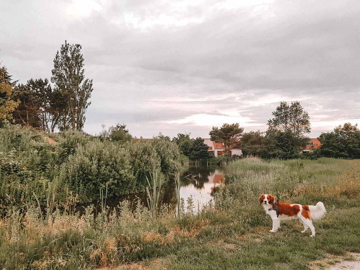 Met de hond naar Vakantiepark De Krim [onze ervaring]
