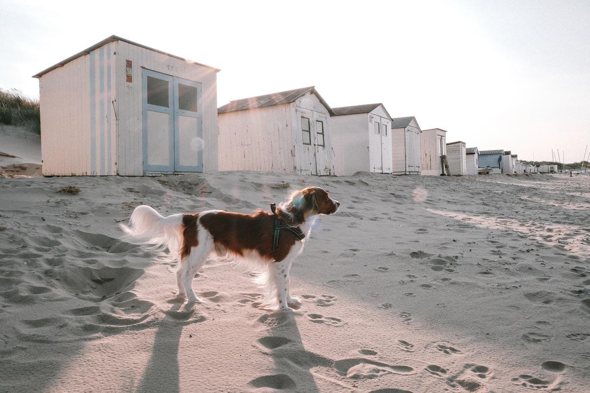 Het strand in het noorden van Texel